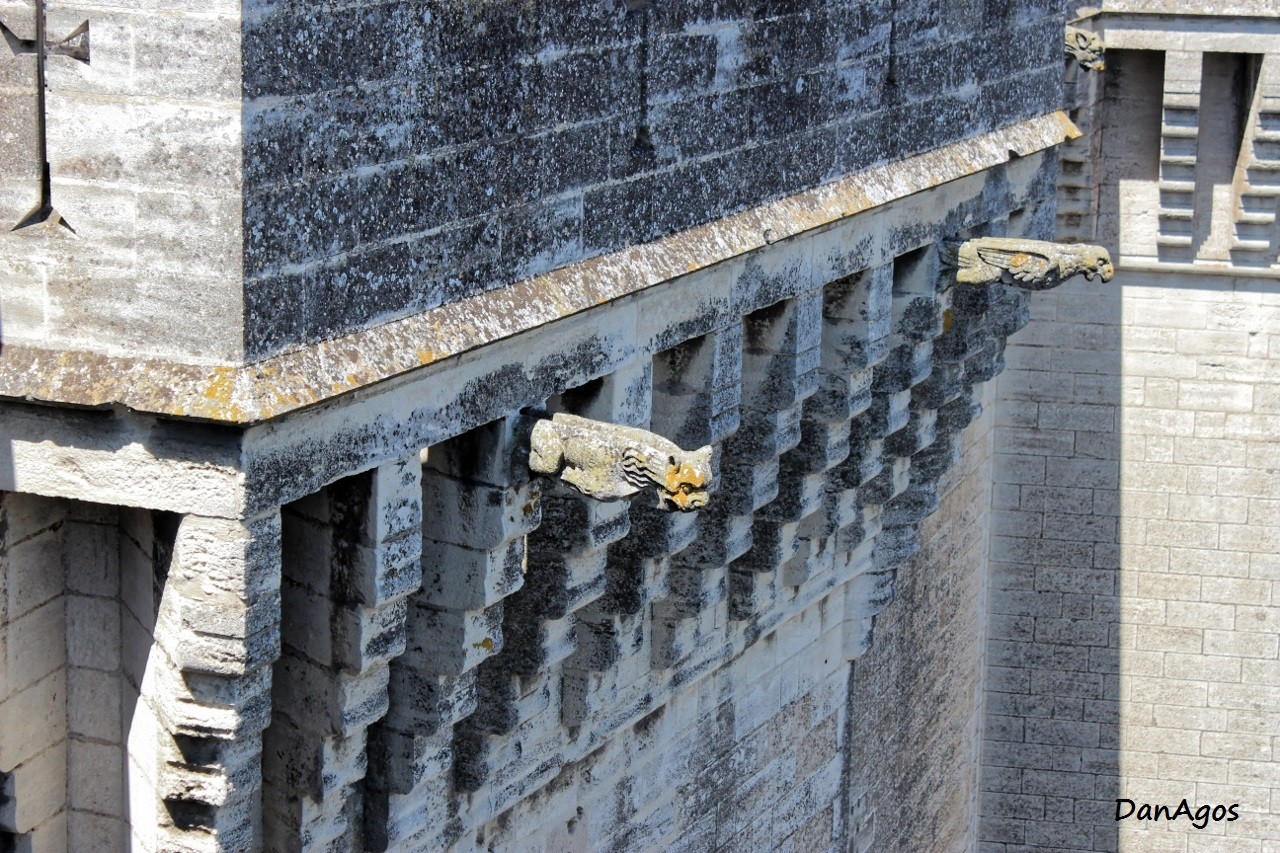13 chateau de tarascon gargouilles